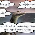 Stress Emotionen und das Reptilienhirn